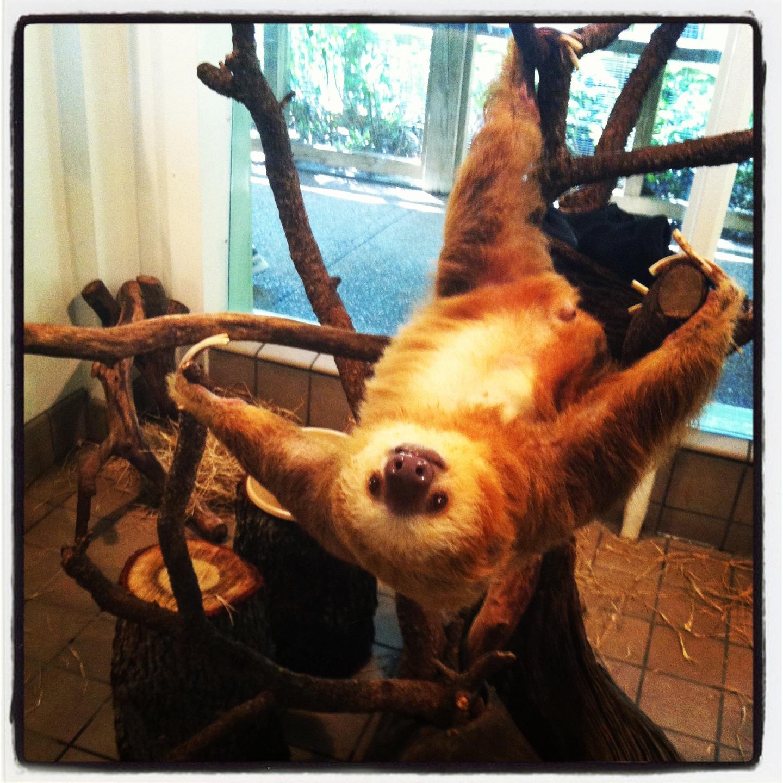 Harry the sloth