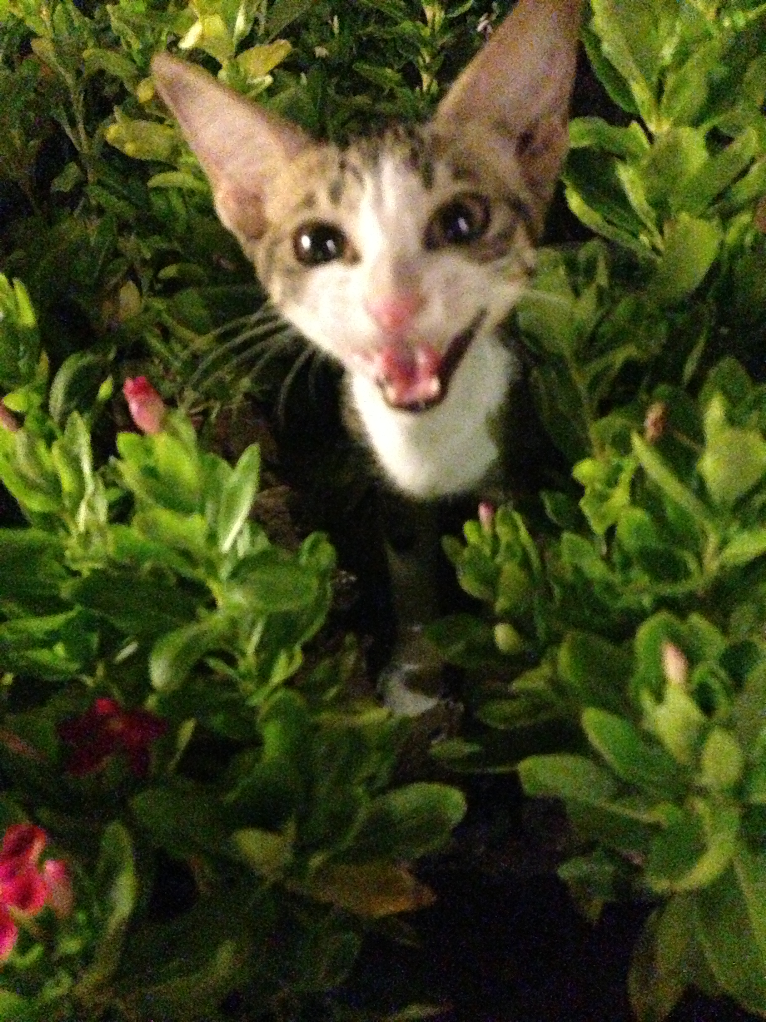 wild kitten in Dubai